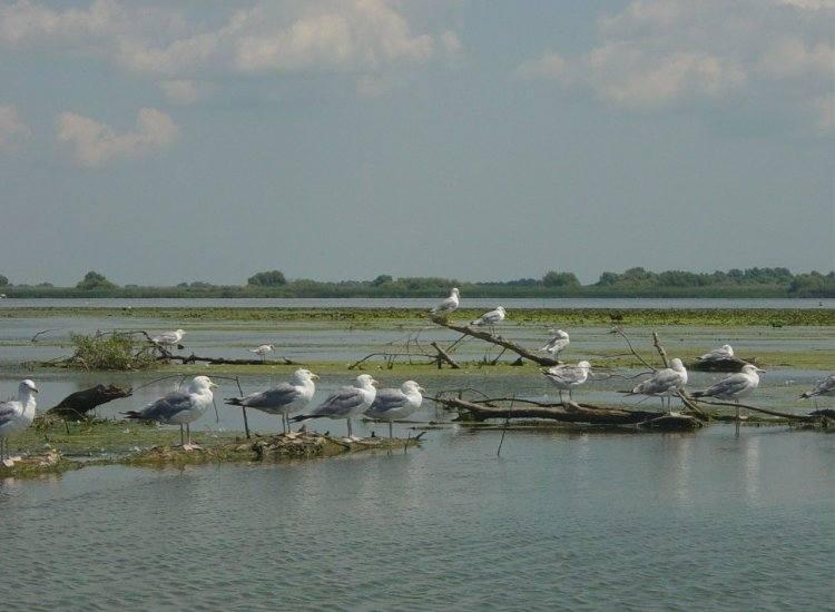 Dunavatu de Jos